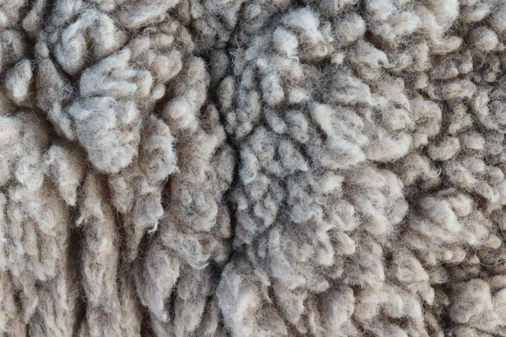 ごわごわした羊毛