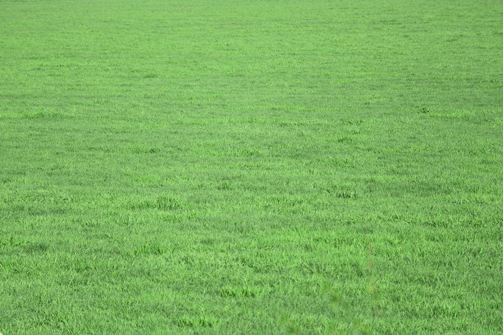 芝生の背景