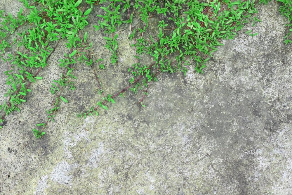 蔓の這った石壁