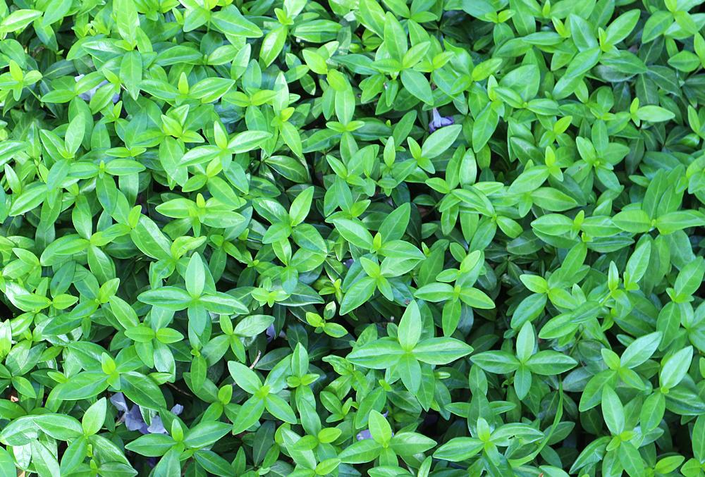 植物のテクスチャ03