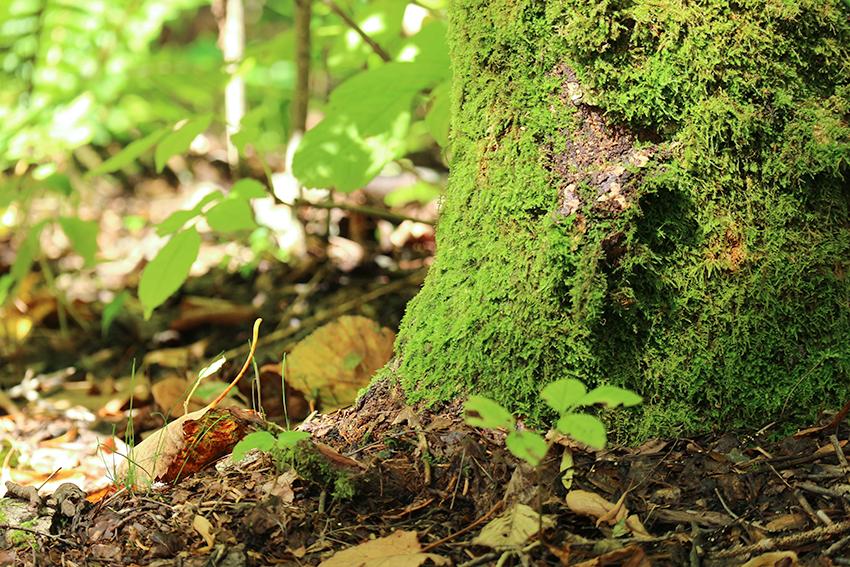 苔の木の背景